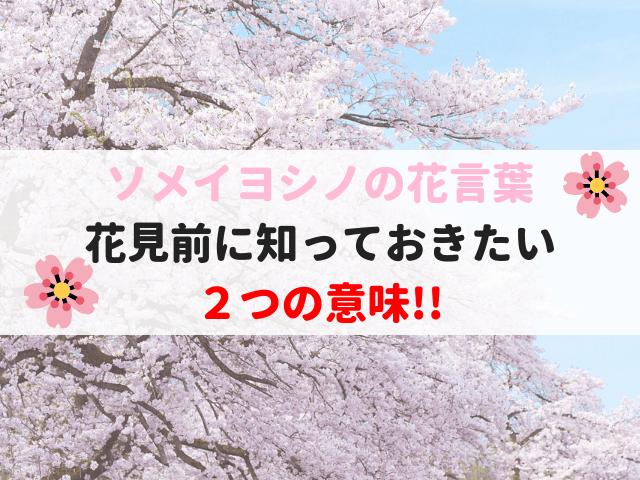 ソメイヨシノの花言葉