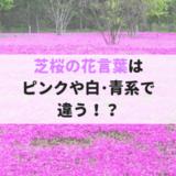 芝桜の花言葉