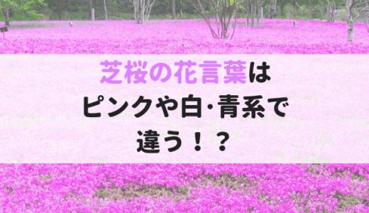 芝桜(シバザクラ)の花言葉!ピンクや白・青系で意味が違った!?