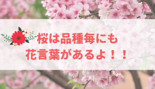 桜の花言葉「私を忘れないで」が怖い?品種別の意味も一発チェック!!