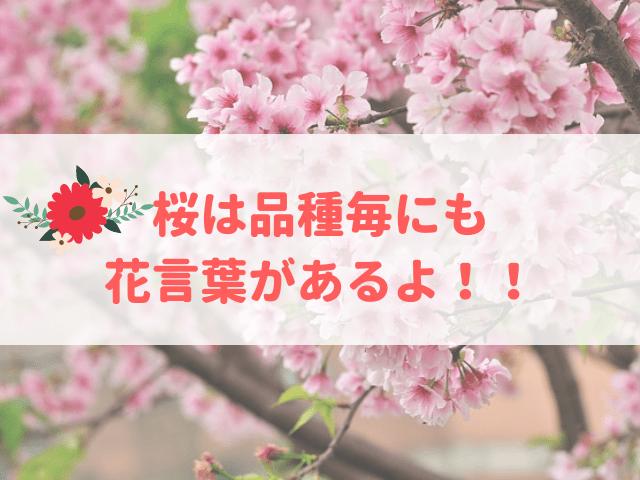 桜の花言葉