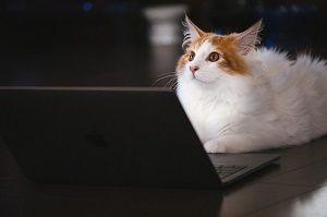 パソコンと猫の写真