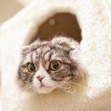 ひょっこり顔を出す猫