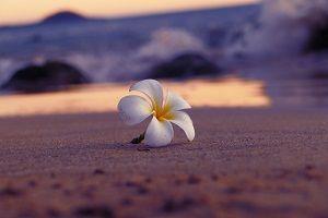 プルメリアの海辺