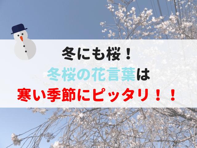 冬桜の花言葉
