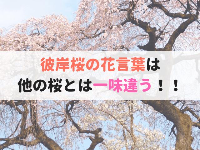 彼岸桜の花言葉
