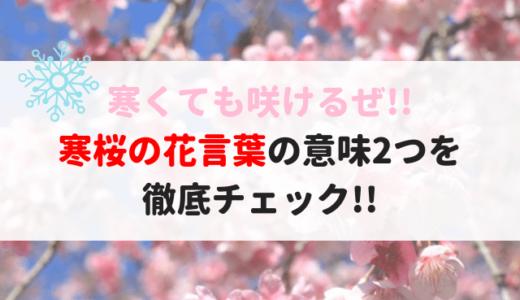 寒桜(カンザクラ)の花言葉と由来!開花時期と名所はココ!!