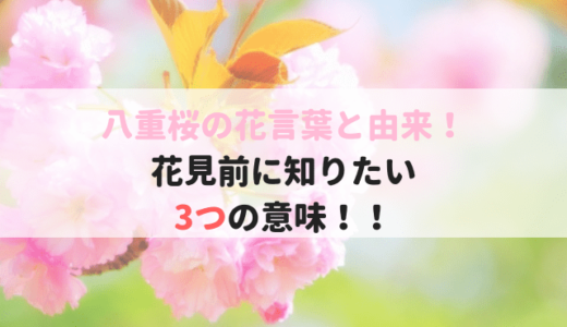 八重桜/牡丹桜の花言葉の由来【花見前に知っておきたい3つ意味】