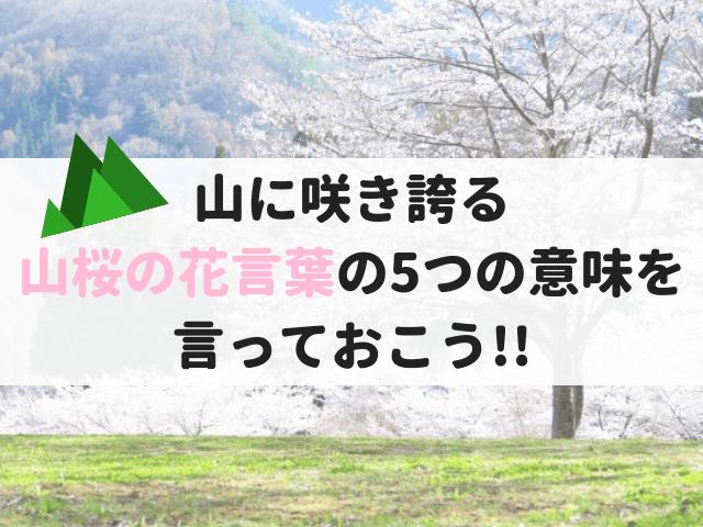 山桜の花言葉